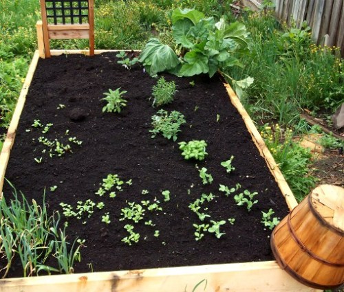 This is my second garden bed (the first one is much less interesting, so it's not pictured here).