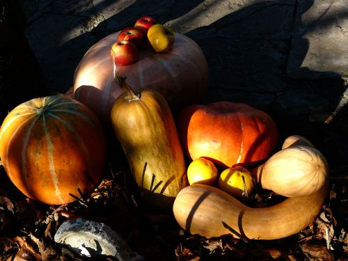 A collection of orange, tan, and white winter squash, topped with a handful of apples, and cast in dramatic shadow. Image by AlreadyExist, via Wiki Free Images