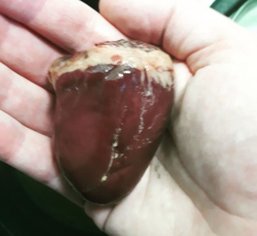 A raw turkey heart rests in the palm of my hand